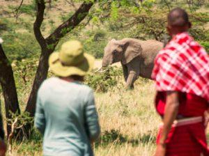 Safari a pie con guerreros Masai en Kenia