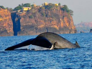 Avistamiento de Ballenas en Galle
